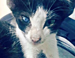 Cara Mengatasi Sakit Mata Pada Kucing