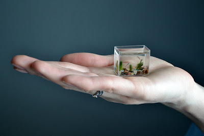 World's Smallest Aquarium With Fishes (7) 5