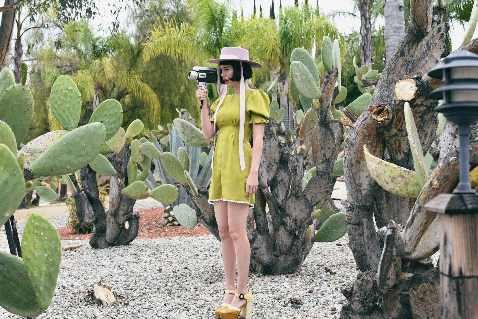 Western Cactuses //