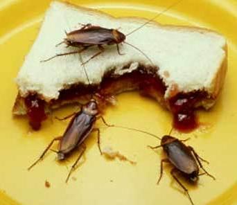 Foto de cucarachas en plena comida