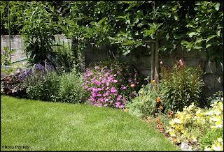 Un giardino di perenni in ticino piante da frutta in for Piante da aiuola perenni