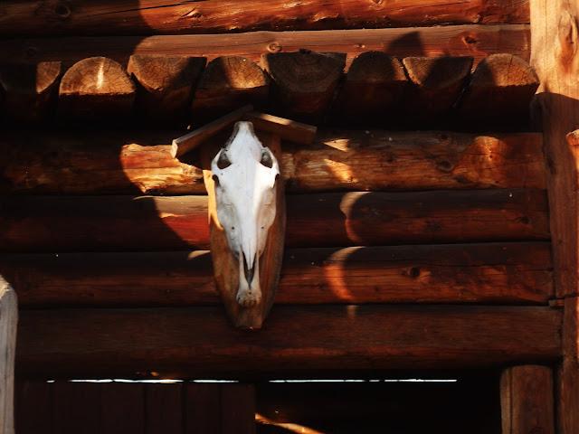 Końska czaszka nad wejściem