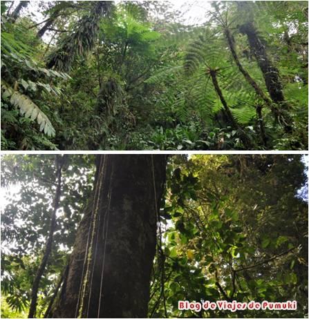 El bosque nuboso alberga, gracias a esta altísima humedad, gran cantidad de musgos, helechos y vegetación en general, por lo que también se habla de selva nubosa. En otras partes del mundo como por ejemplo bosque de laurisilva en islas atlánticas como las Canarias.