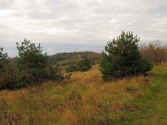 Widok na wierzchołek Łysej Góry.