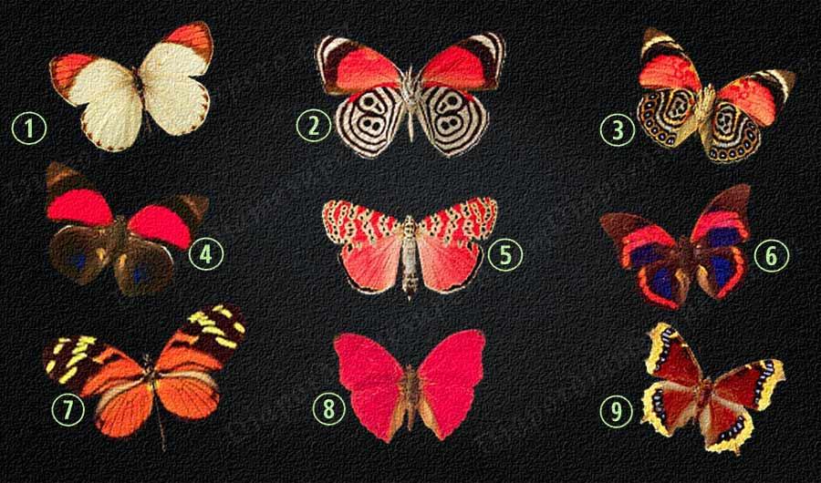 Test: Elige una mariposa para descubrir qué pensamientos esconde su  subconsciente