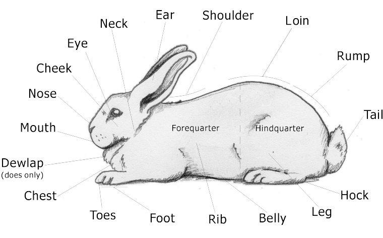 angello morgado bunny diagram #8