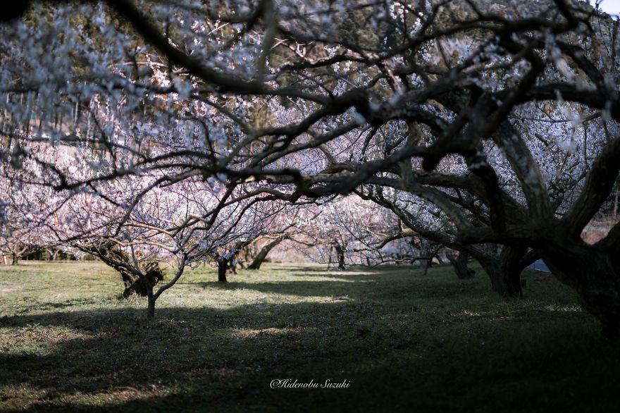 omorfos-kosmos.gr - Υπέροχες ανοιξιάτικες φωτογραφίες από την Ιαπωνία