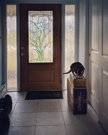 image of Sophie the Torbie Cat sitting atop a stack of boxes in our front entryway, eating her breakfast out of a small bowl