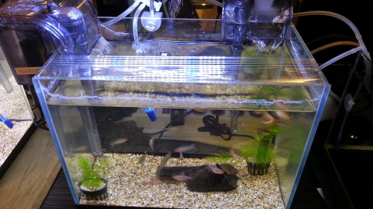 威廉的搞缸紀錄: 防止魚兒跳缸的方法~~超簡單