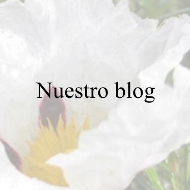 https://blogentorno.blogspot.com/