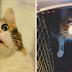 17 Gatos que são claramente você no trabalho
