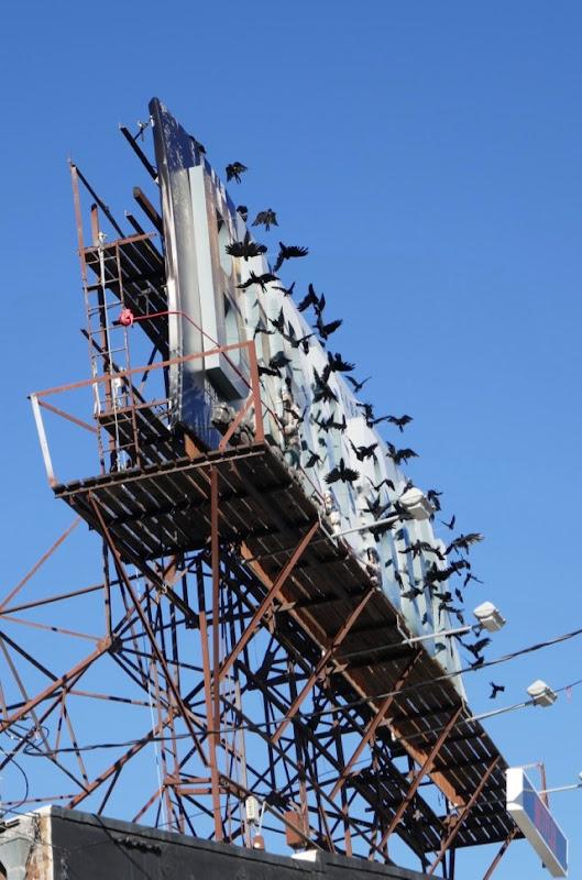 Bird Box special 3D crow installation billboard