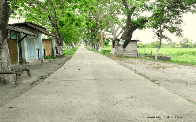 Dakhinpat Satra Road Of Majuli Island