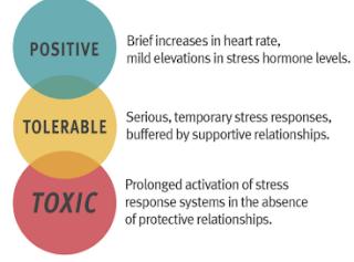 effect of stress on development