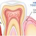 Infeksi Gigi , Penyakit Gum Menghasilkan Perubahan Darah Yang Mengagumkan