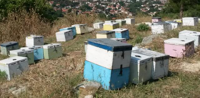 Επαγγελματίας έβαλε 450 μελίσσια δίπλα μου εκεί που ξεχειμωνιάζω: Μια «σκληρή» λογομαχία μεταξύ μελισσοκόμων...