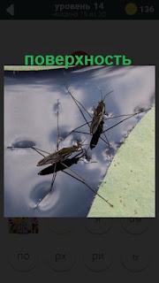 насекомые находятся на поверхности воды