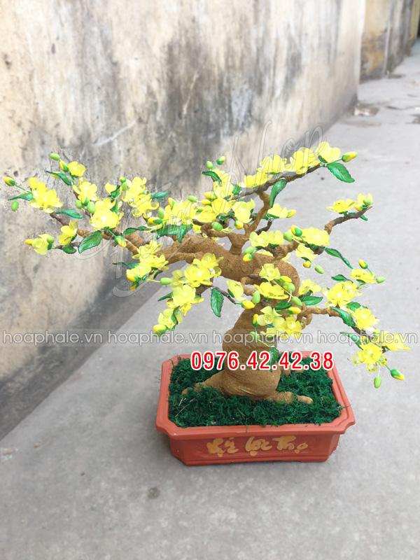 Goc bonsai mai dao o Tran Cung