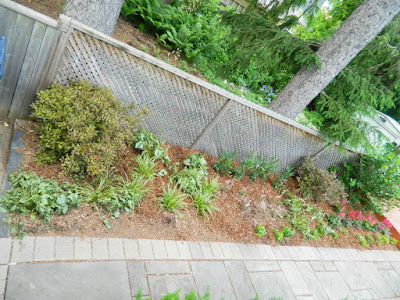 Humewood Toronto backyard garden makeover after Paul Jung Gardening Services