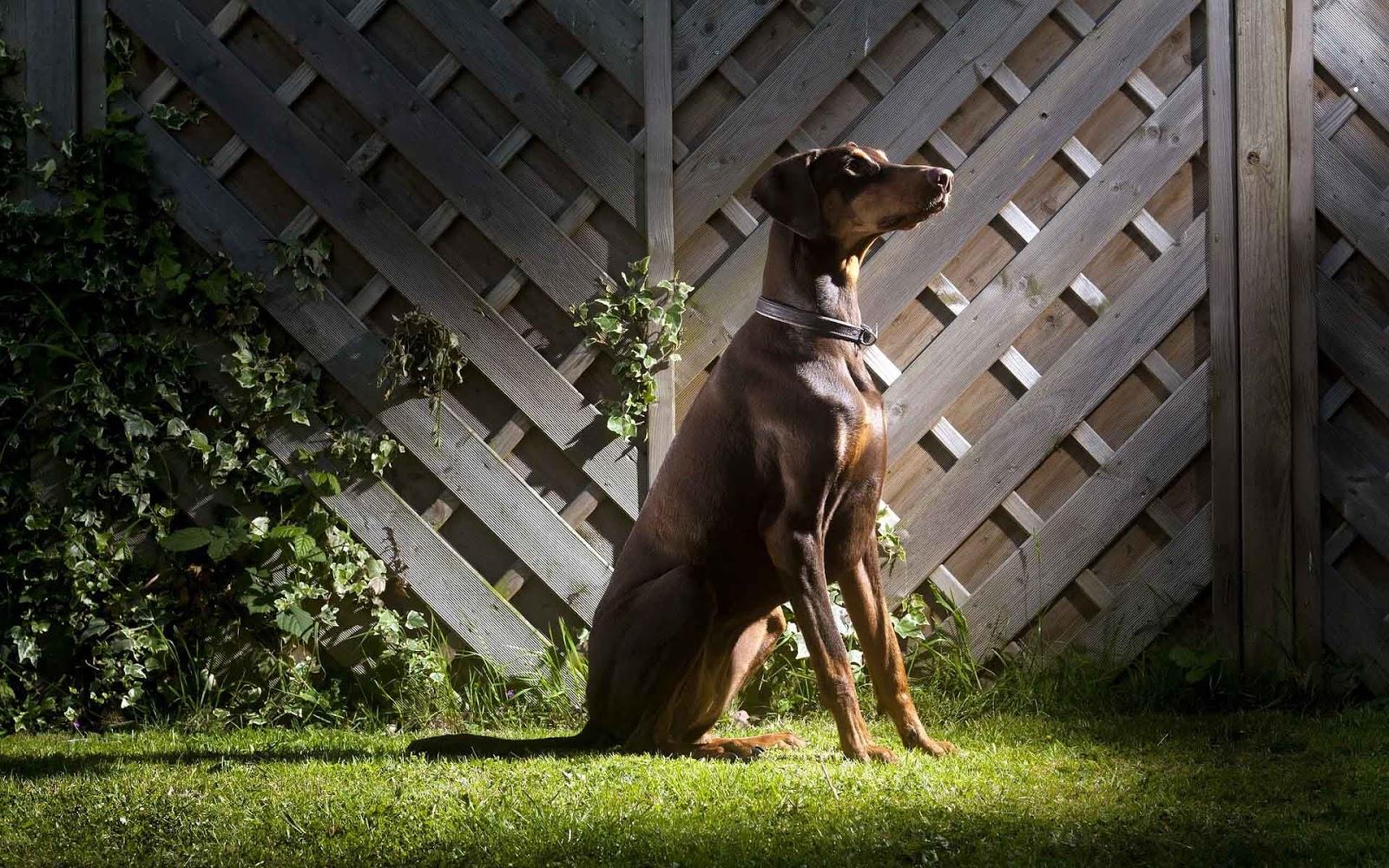 Een hond achter in de tuin op het gras