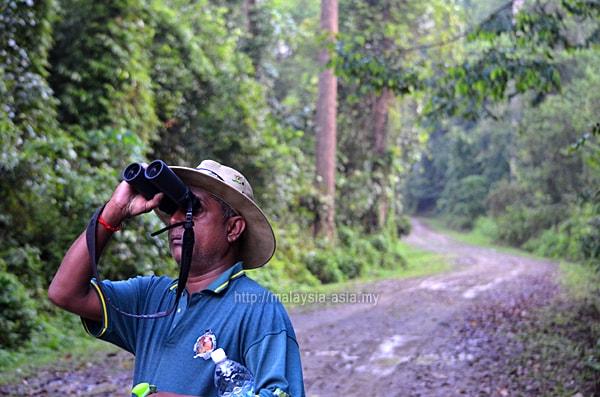 Bird Watching at Maliau Basin Sabah