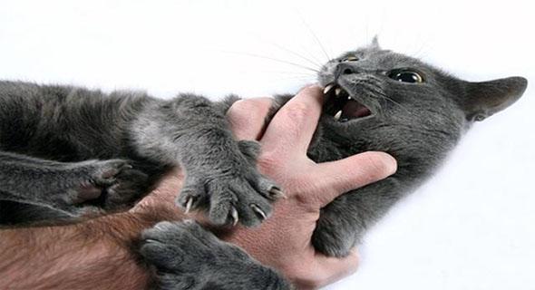 Dicakar Kucing Karena Mencuri