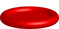 Erythrocyte (red blood cell)