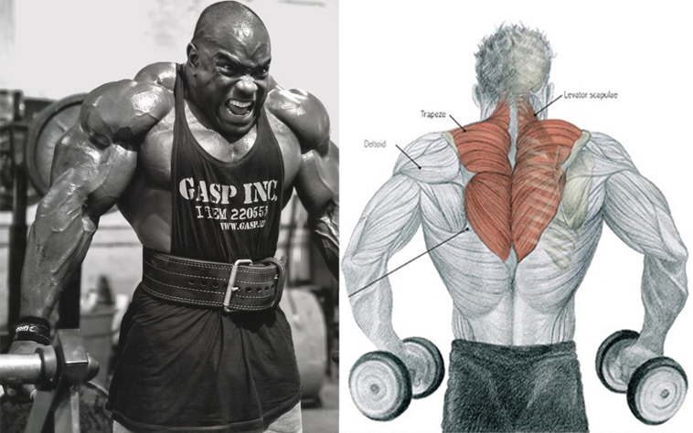 You Probably Dont Need Any Convincing To Realize The Aesthetic Benefits Of Trap Development This Long Triangle Shaped Muscle Located On Top Your