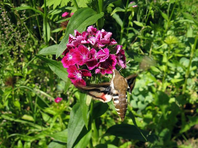 Бабочки, шмели