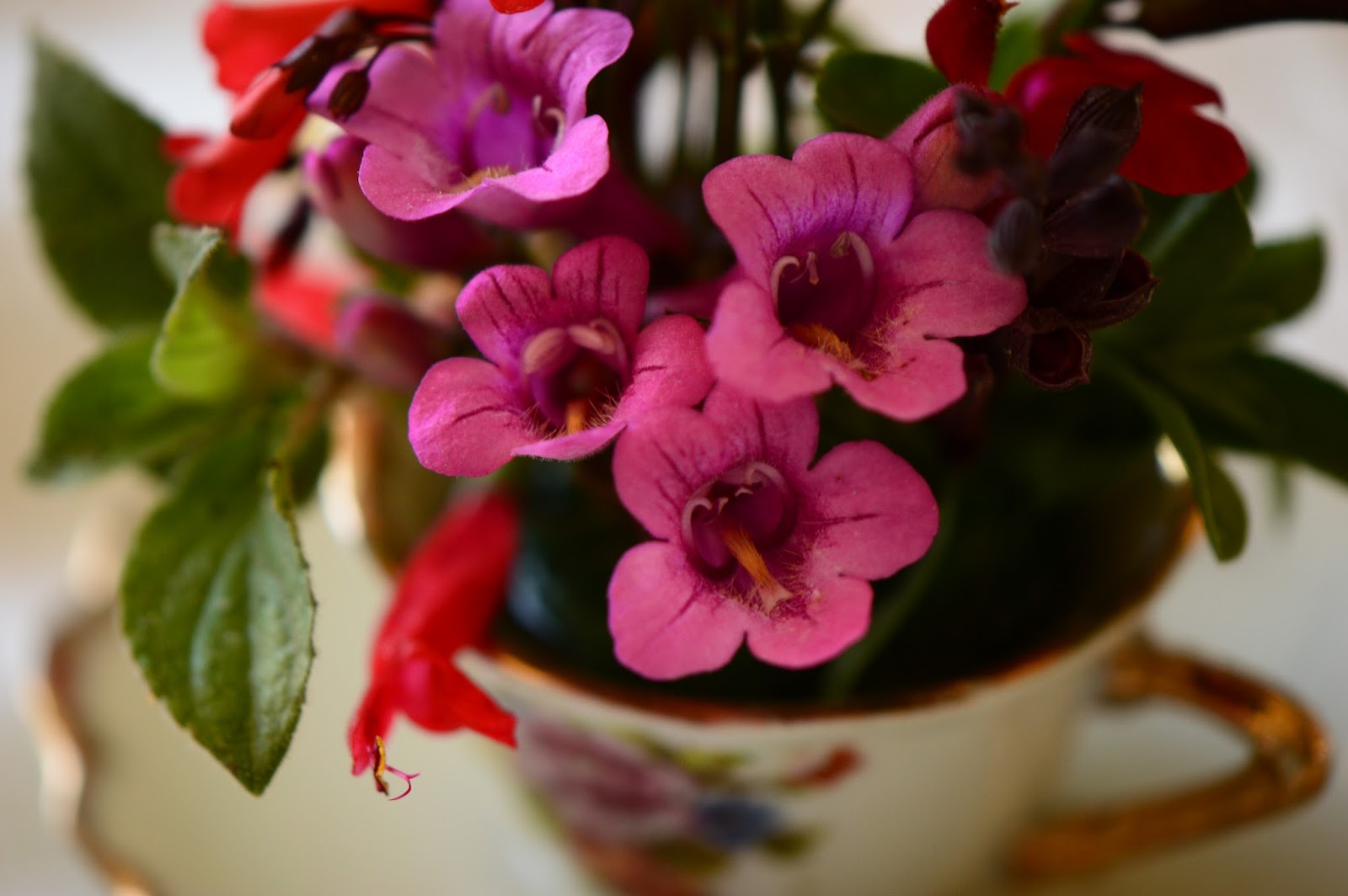 Monday Vase meme, Penstemon parryi