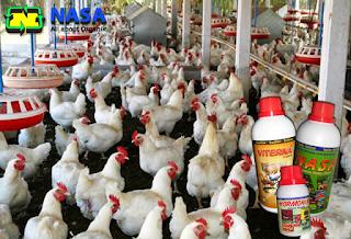 Viterna Plus untuk Ayam Potong