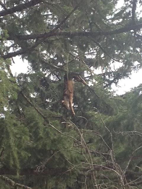 Monkey Doo: Weasel Creek 2013