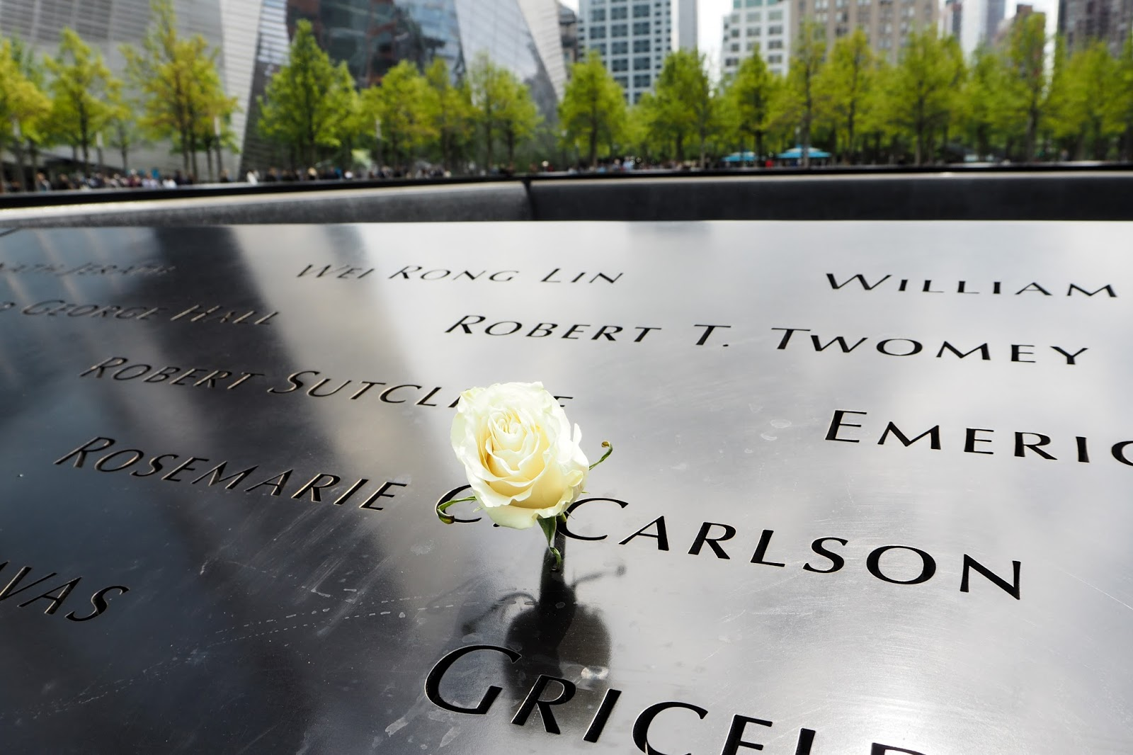 White rose laid down at Ground Zero