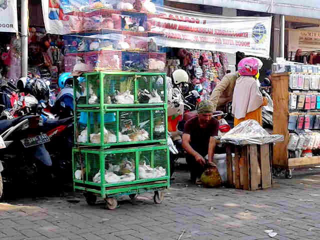 Rabbit Seller in Bogor City