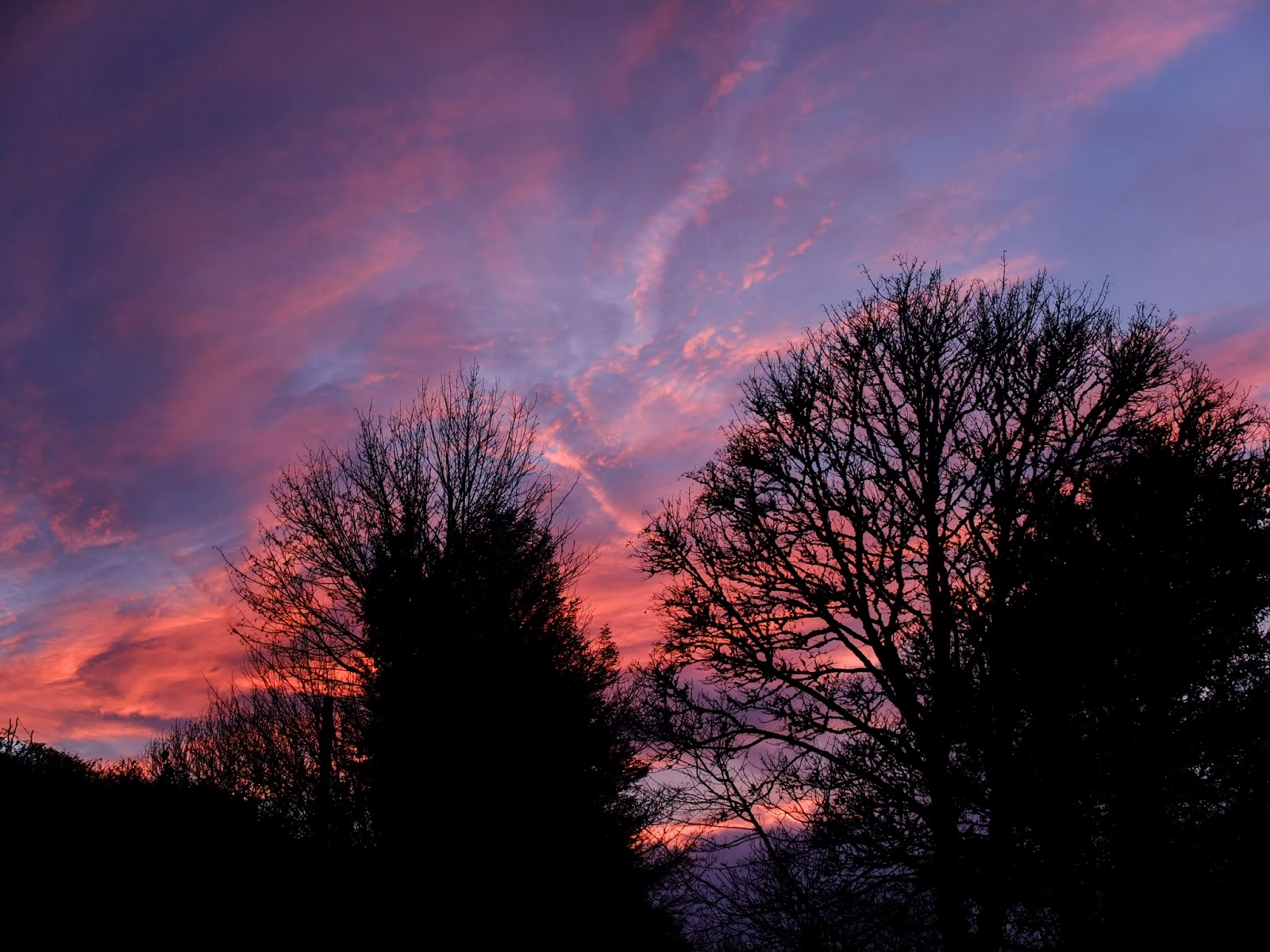 Purple and pink sunset over trees in the Boggeragh Mountains, Co.Cork