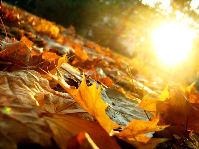 Ja nisam s ovoga sveta,pripadam rasi sanjara - Page 5 Autumn_leaves