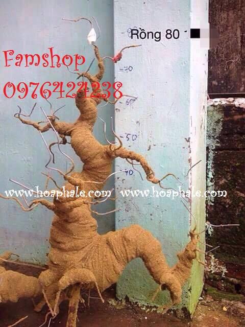 Goc bonsai mai dao tai Pham Tuan Tai