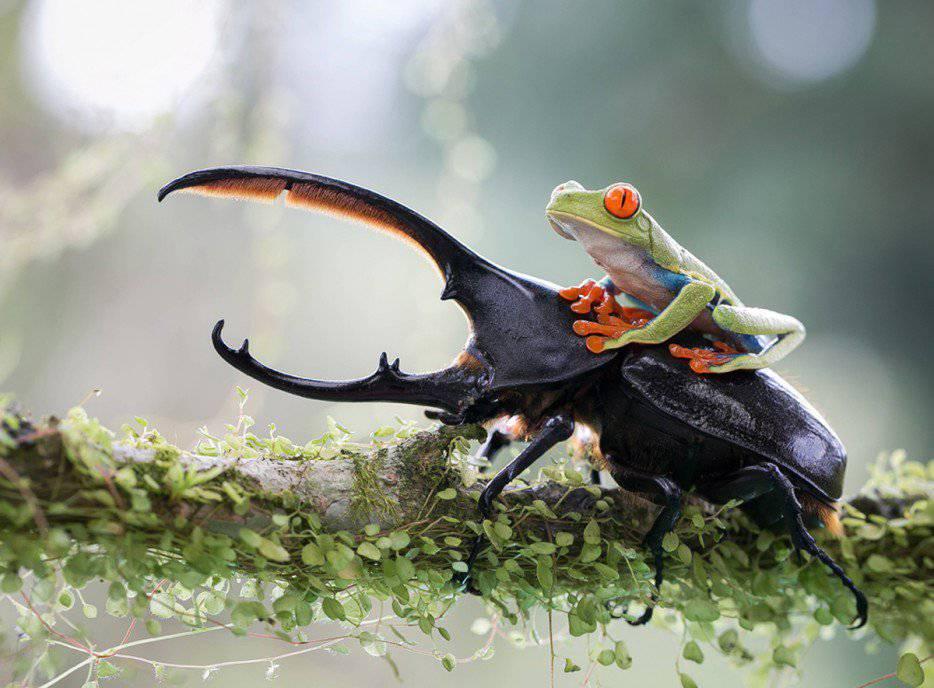 """Résultat de recherche d'images pour """"dame nature avec animaux"""""""