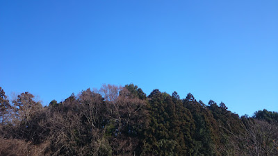 谷津の林。本日も快晴。