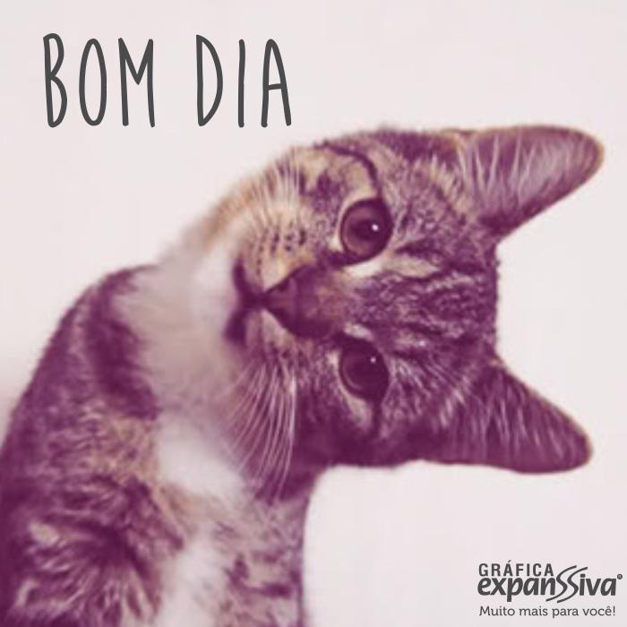 mensagem de bom dia com gatinhos