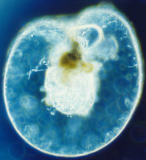 Ciri, Klasifikasi, Peranan Protozoa bagi Kehidupan