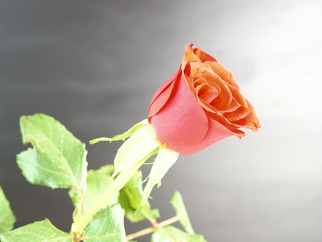 3d rose live wallpaper for pc