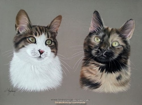 08-Cats-Lorine-Angelmann-Cool-Realistic-Animal-Drawings-www-designstack-co