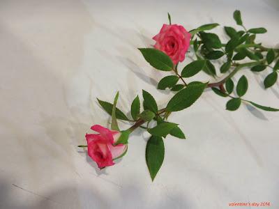 Kết quả hình ảnh cho cành hoa hồng