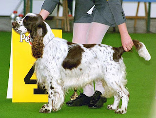 dog Sports and shows-dog breeds-pet