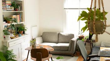 ¿Porque decorar nuestro hogar con flores y plantas?