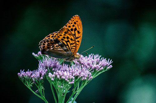 Taman Kupu-kupu Bali Butterfly Park - Objek Wisata di Tabanan, Bali