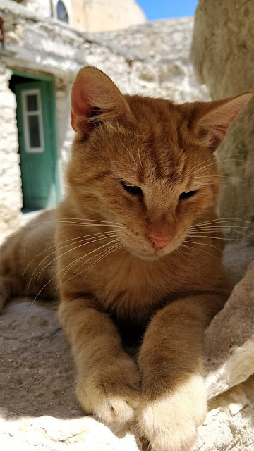 cat in Omodos Cyprus