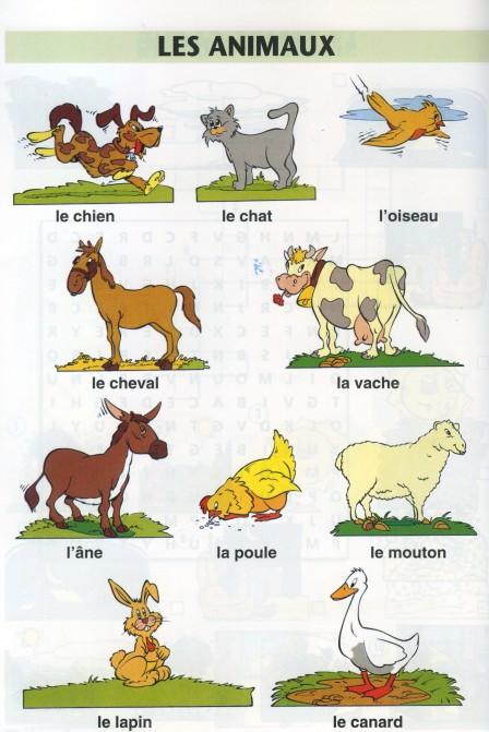 Zwierzęta - słownictwo 1 - Francuski przy kawie