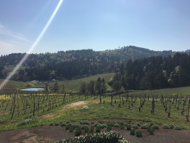 Winderlea Vineyard, Oregon | A Hoppy Medium